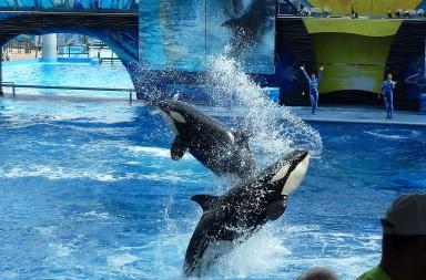 killer-whale-113527_1280